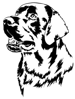 T Black Dog